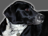 Sara 1998 - 2011