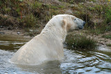 4) Polar bear bath / Isbjornebad