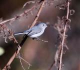 Leonabelle Turnbull Birding Center
