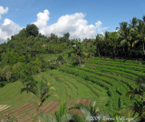 Balinese Terraced Hillside