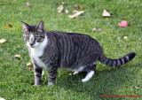 Digger, Bev's Kitty