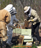 Beekeeping in Strafford