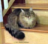 Serenity, Anni's Secret Cat