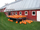 Pumpkins at Hurricane Flats