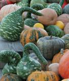 Goosenecked Gourds