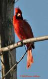 Turning Cardinal