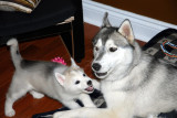 Asha and Koda 02.JPG