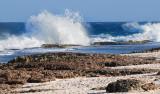 Wild Side Bonaire