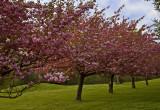Spring in Oakdale