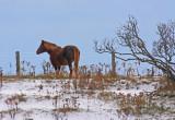 Horse-silhouette.jpg