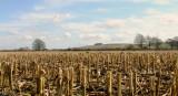 Barbury Castle across a stubbly field , near Uffcott.
