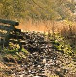 Near  Bincknoll  Wood.