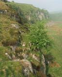 Looking  along  misty  cliffs.
