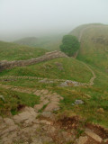 The  descent  to  Sycamore  Gap.