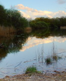 Wake Pond,Epping Forest - 5