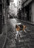 un chien Parisien