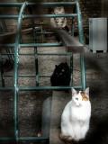 tres gatos...