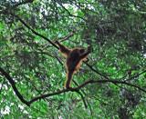Our First Orangutan
