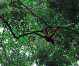 Orang on the Move
