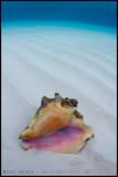Shell underwater