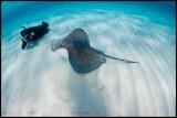 Stingray & snorkler