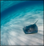 Stingray at Sandbar