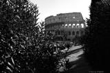 Coliseum (b/w)