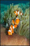 3 Nemos in a row