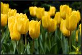Spring in NY