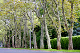 Trees**