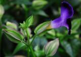small blue purple flower.jpg