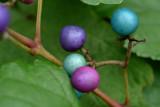 Colored road berries 2.jpg