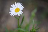 Painterly flower.jpg