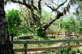 Florida State & County Parks