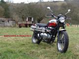 Triumph_Scrambler_900_static 046r.JPG