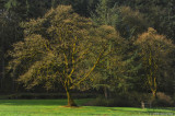 Stately Oak Tree