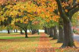 Fall Colors in Willamalane Park
