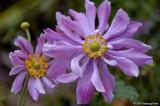 D50-2007-10-30_019.jpg
