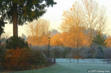Alton Baker Park on a frosty morning