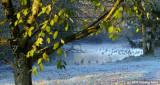 D2x2007-11-23_039crop.jpg