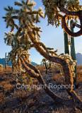 09-12 Tucson MP 03.JPG