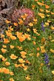 10-03 Picacho Peak State Park 11u.jpg