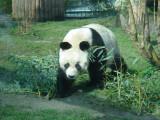 Hello from Bao Bao!
