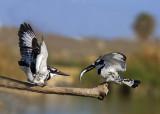Birds in the Wild