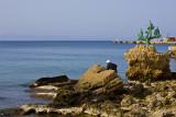 sIMG_5455-Rhodes_Port_Dolphins.jpg