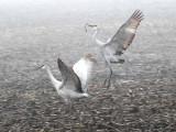 Foggy Delta Dancers