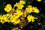 Ruth Bancroft Gardens of Walnut Creek