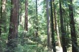 Northern California - Oregon Coast