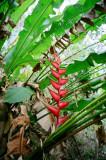 TobagoForestFlower.jpg