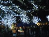 Christmas at Predator Ridge2